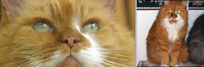 kucing tertua