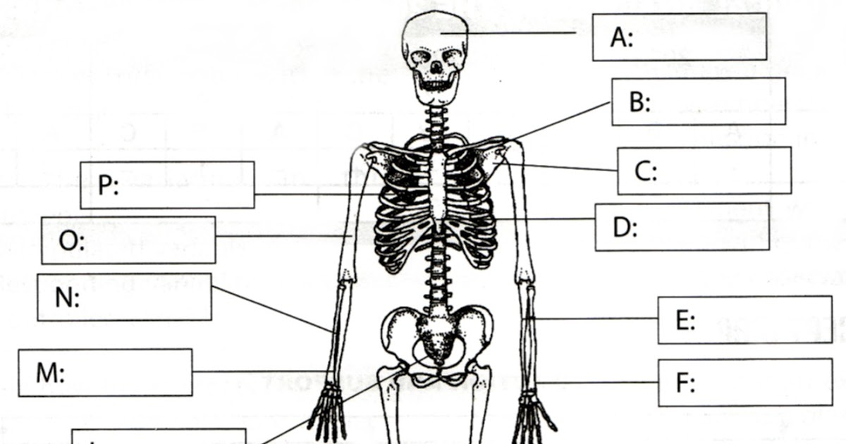 lorianne crook pantyhose: a diagram of the skeletal system