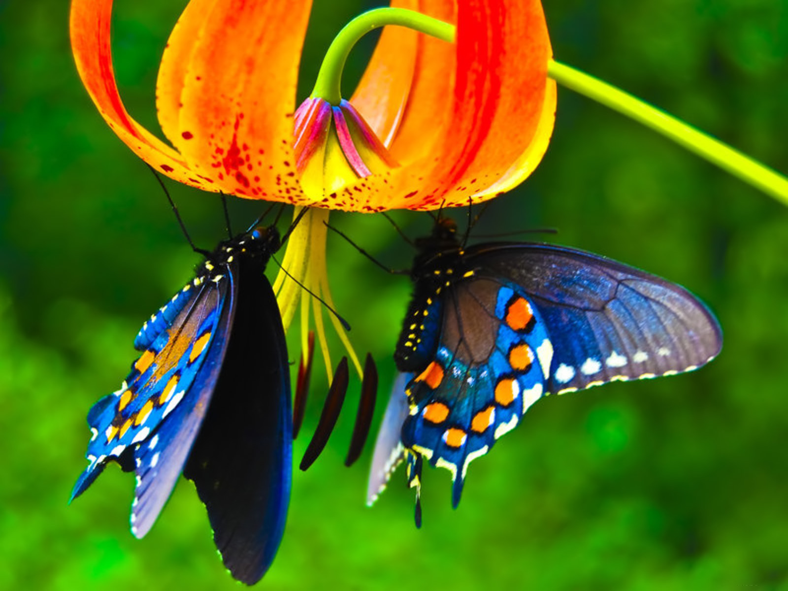 BouglLe GalLery: Butterfly Wallpapers