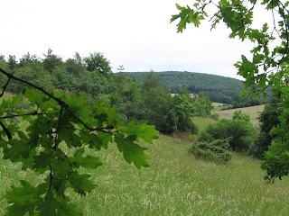 Traditions celtes : le chêne, arbre sacré 5