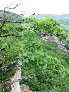 Traditions celtes : le chêne, arbre sacré 9