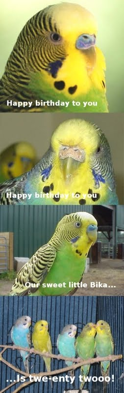 Budgies are Awesome: September 2010