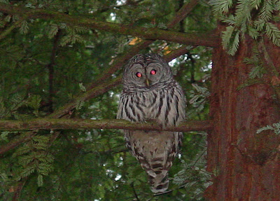Scott MacLeod's Anthropology of Information Technology ...  Owls Portland Oregon