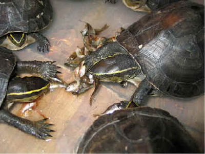 What Foods Do Sea Turtles Eat