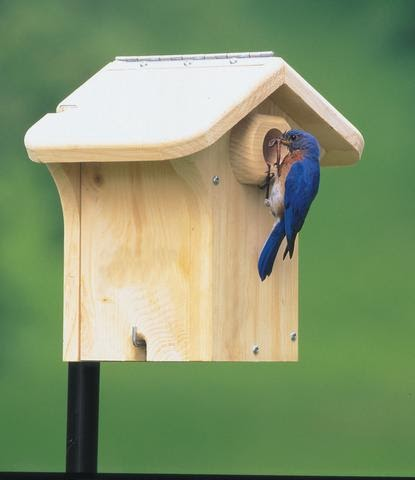 Wild Birds Unlimited Which Way Do You Face A Birdhouse