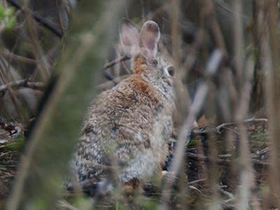 Wild Birds Unlimited: Nature up close: What do bunnies eat