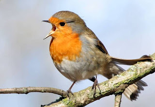 Wild Birds Unlimited: Free Downloads of Bird Sounds from Around the