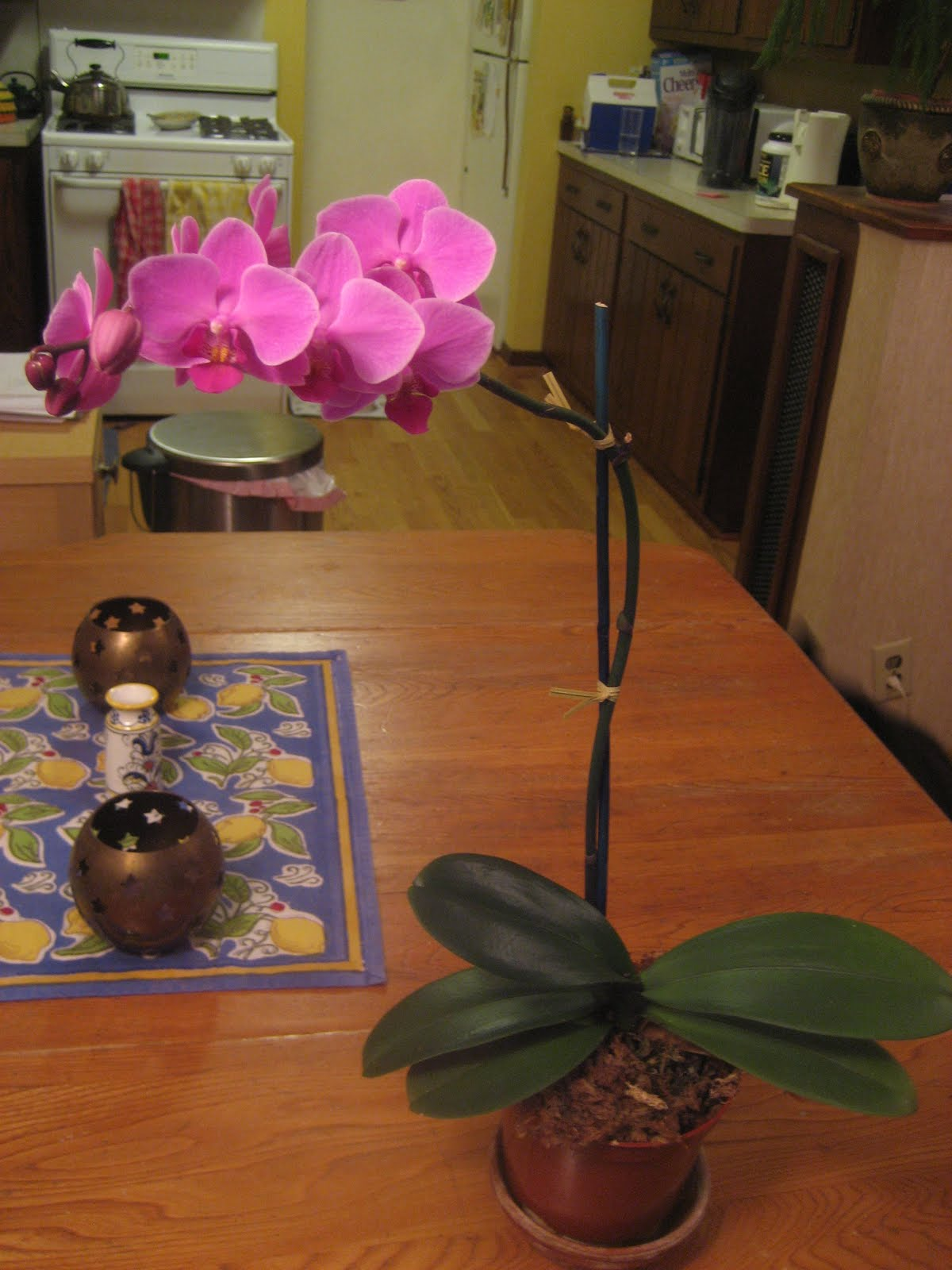 Chuck Does Art Ikea Orchid Great Success