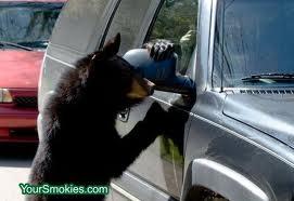Gatlinburg Cabin Rentals Black Bears Around The