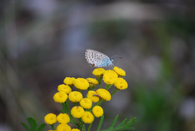 Blüten, Schmetterling, bystrickwerk