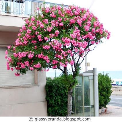 vakre og eksotiske blomster