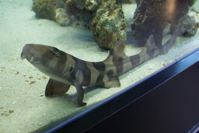 bamboo shark tank -#main