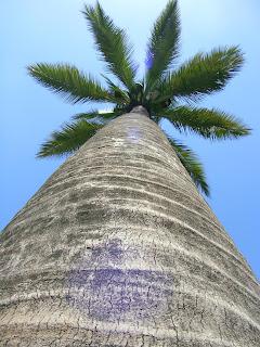 Urbatorivm apolog a santiaguina de la palma chilena parte i - Lamparas las palmas ...