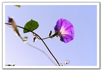 fotografia de flor morada