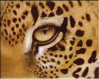 hermosa imagen de oso de leopardo - felino