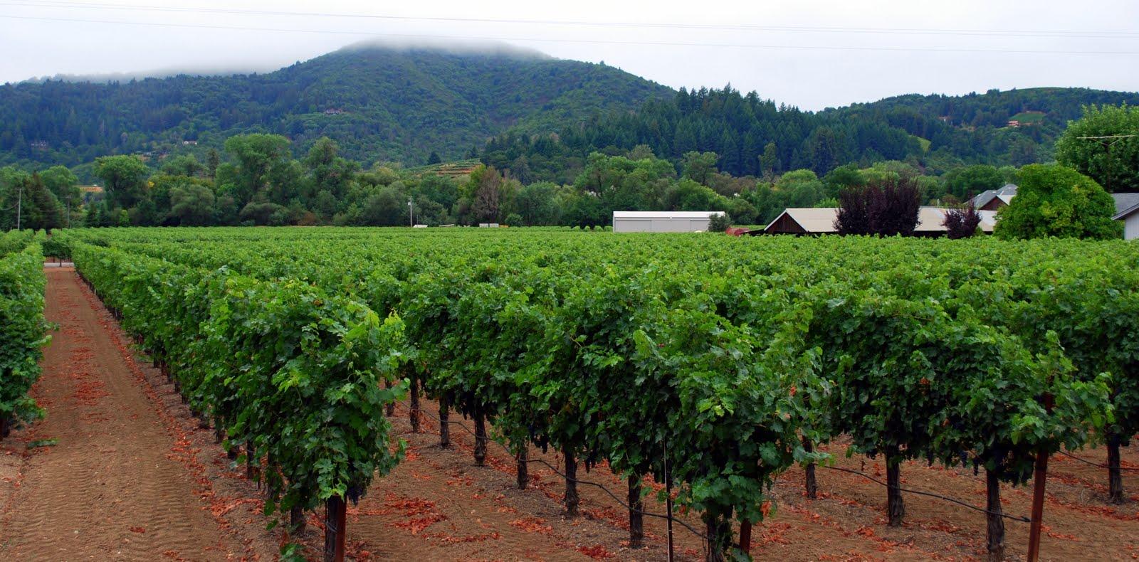Mille Fiori Favoriti Sonoma County\u0027s Wineries ~ Ferrari,Carano