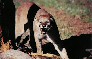 What Emily Thinks: Blood thirsty lions attack us all the time
