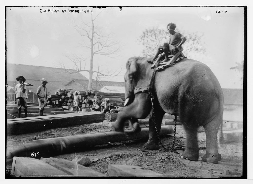 Elephant at Work - Vintage Photograph India