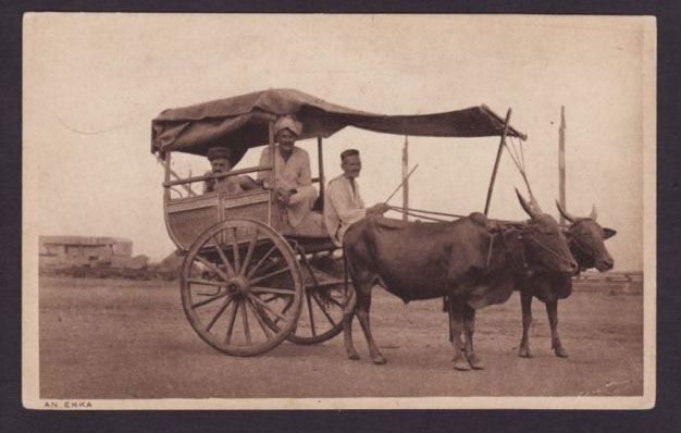 Ekka Transport - Old Post Card - 1910s