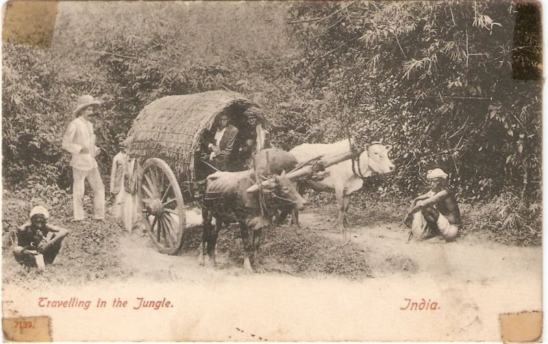 Travelling in the Jungle in Bullock Cart - Old Postcard India