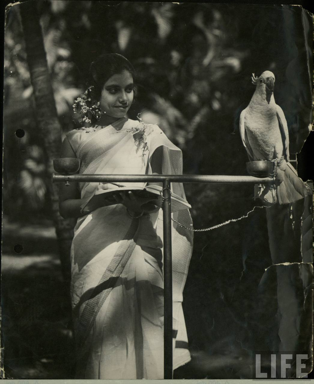 Beautiful Indian Lady with a Parrot