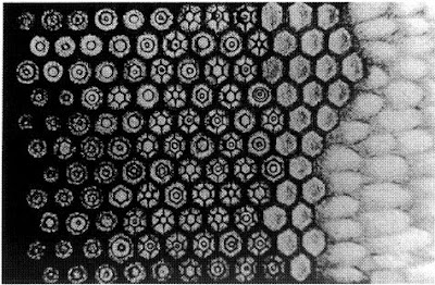 Waveguide modes in the rod cells of a frog's retina, hand drawn by A. Hannover in 1843.