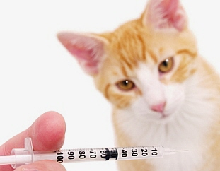 Why We Vaccinate Even Indoor Cats