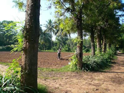 Fermiers bio heureux en Inde : le bonheur est dans le pré ! 4