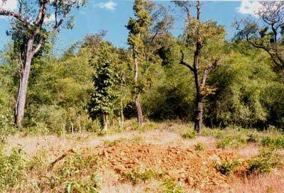 Neriya forests in Dakshina Kannada in Dec 1999, before the Mangalore Bangalore Pipeline (MBPL).