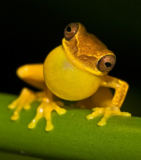 Animal Collections: Butter Living: 10 Amazing Yellow Animals