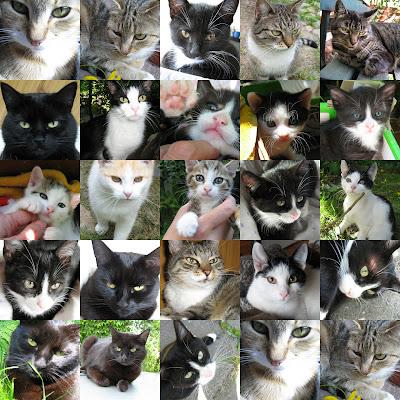 80aee33830a999 Wszystkie nasze koty oprócz oficjalnych imion (bo nazwisko, wiadomo, noszą  nasze) mają nadane przezwiska, jakieś pseudonimy, ksywki tak zwane.