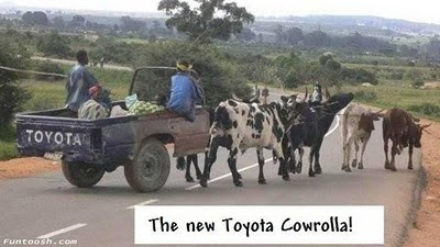 cow-pulling-ruined-car-with-Toyota-sign