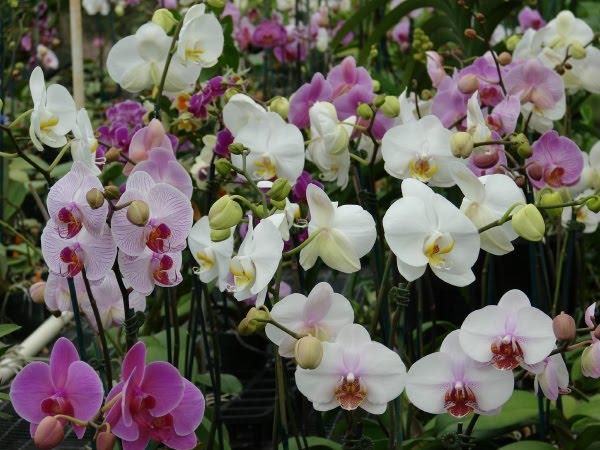 Crear un jard n orqu deas m xima belleza - Tiestos para orquideas ...