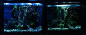 T2 versus CFL aquarium light shows more green, yellow