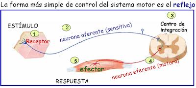 El dibujo sensitivo y expresivo de la figura humana cfnm - 2 7