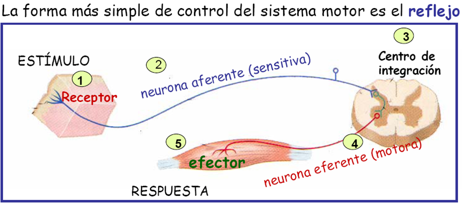 El dibujo sensitivo y expresivo de la figura humana cfnm - 3 9