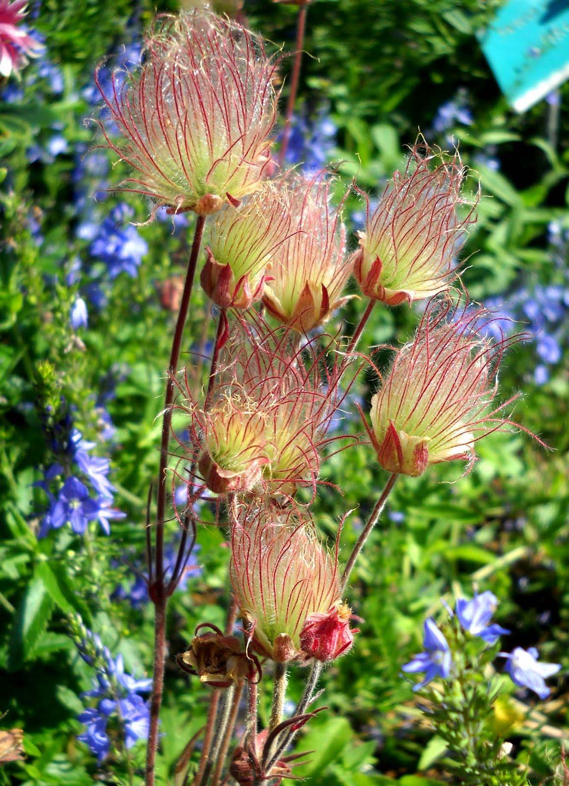 Unusual Flower Blissful Solitary Wanderings