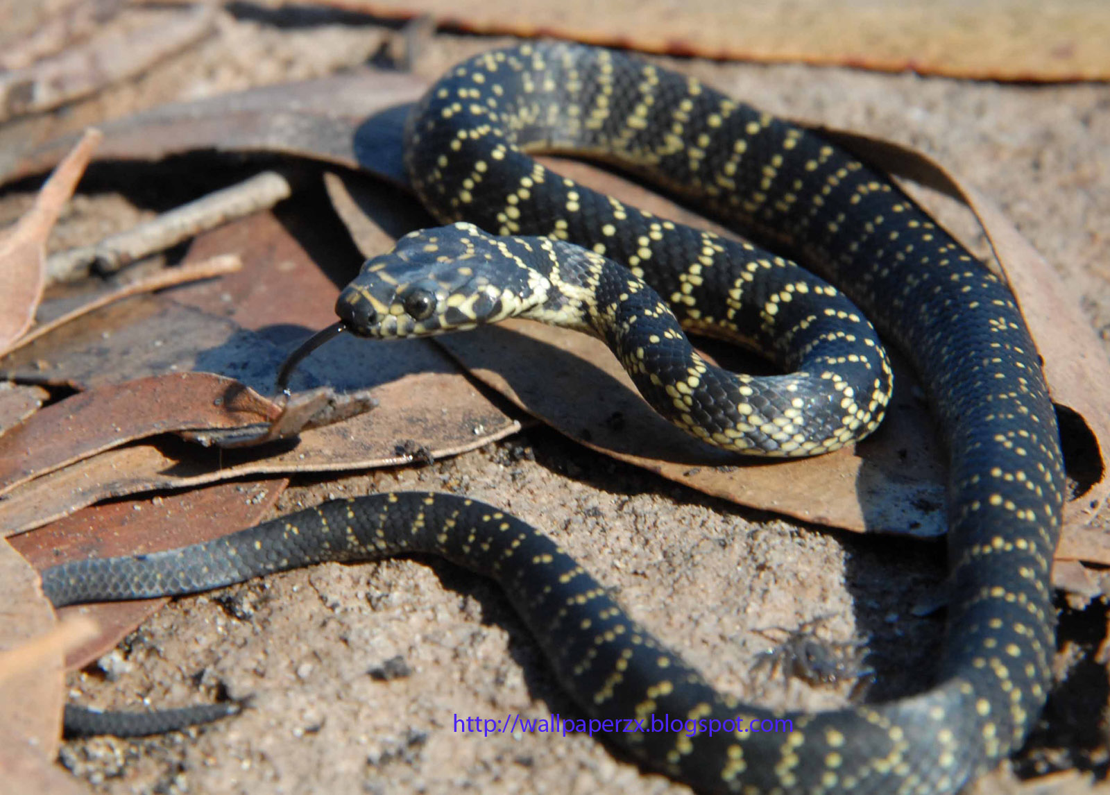 Hd 3d Snake Wallpapers Wallpapers Hq Amazing Snakes Hd Wallpapers