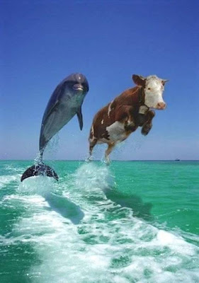 Funny Stress Test Dolphin Cow Picture