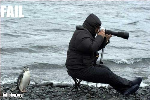 Funny Fail Pic - Seen any penguins