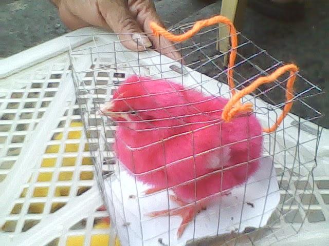 Ang sarap pink na pink ang utong wwwkanortubecom - 4 1