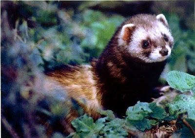 Beauty Of Wildlife Wildlife Of Snowdonia