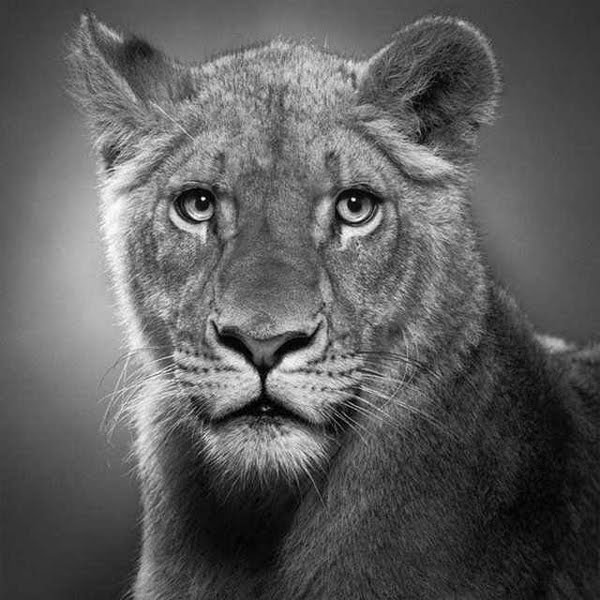 MULTIPLE: Amazing Pencil Drawings of Animals That Look ...