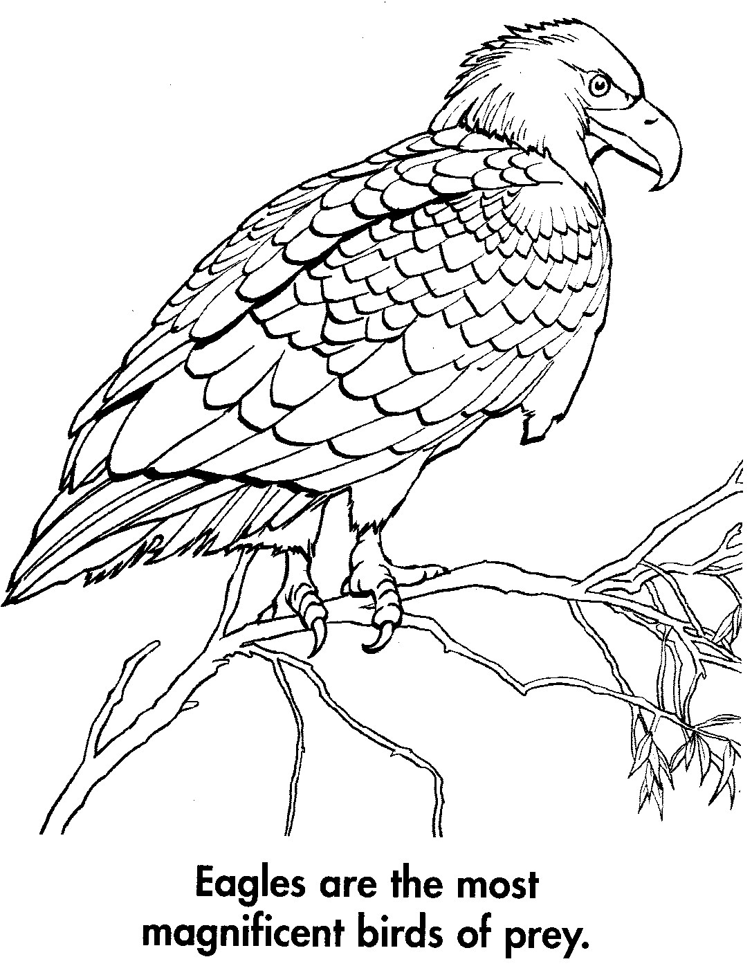 sport life: Planet Earth Coloring Book Awesome Animals (95 ...