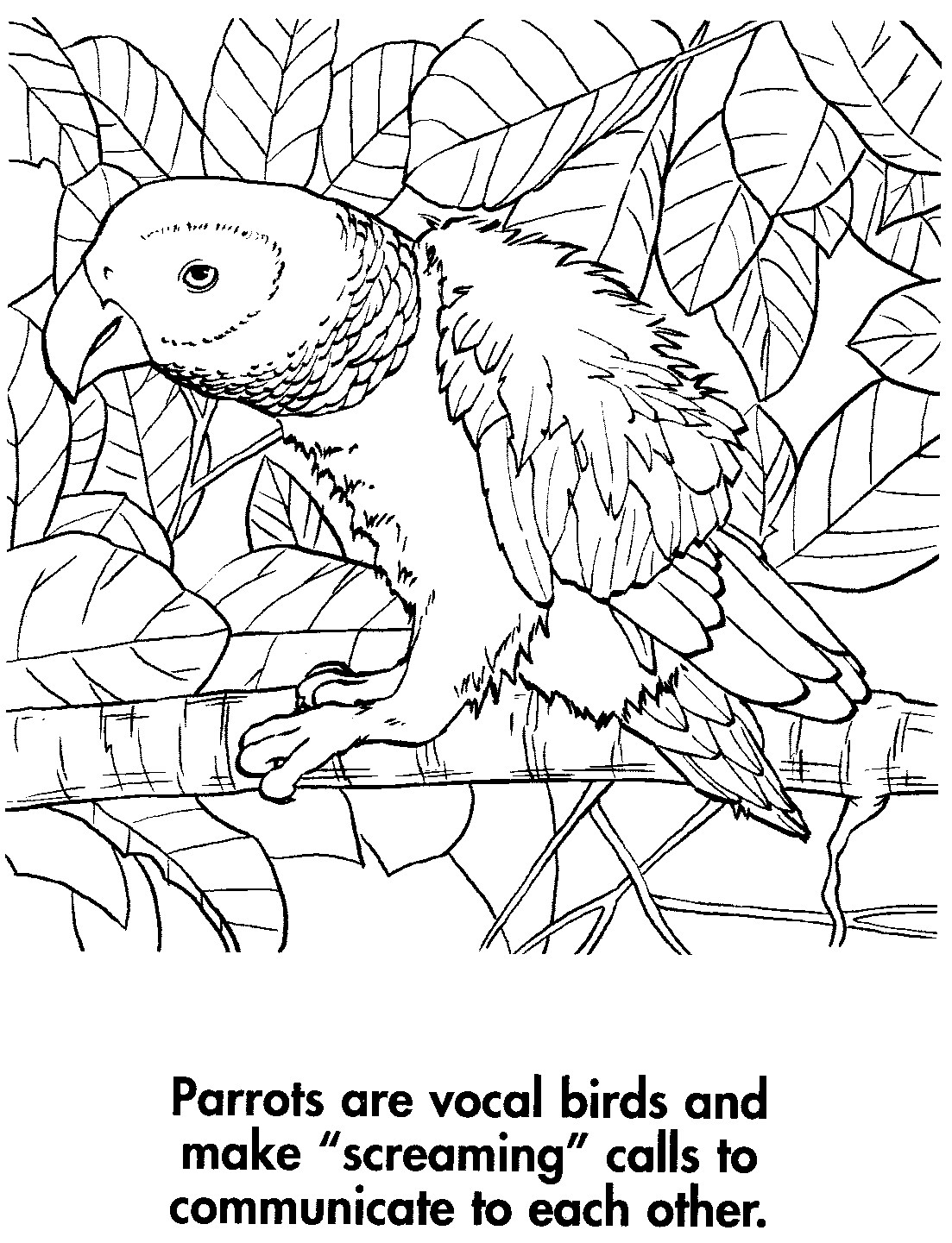 Sport life planet earth coloring book awesome animals 95 for Animal planet coloring pages
