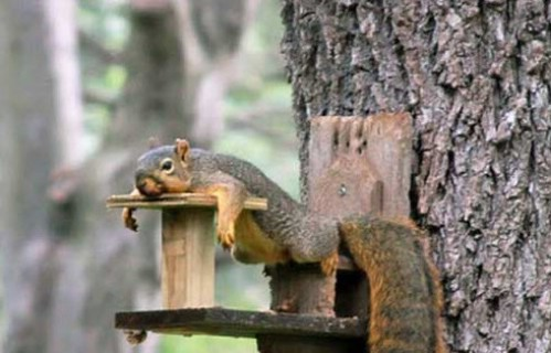 Photos of Extremely Tired Animals Passed Out - Easy to Share  Photos of Extre...
