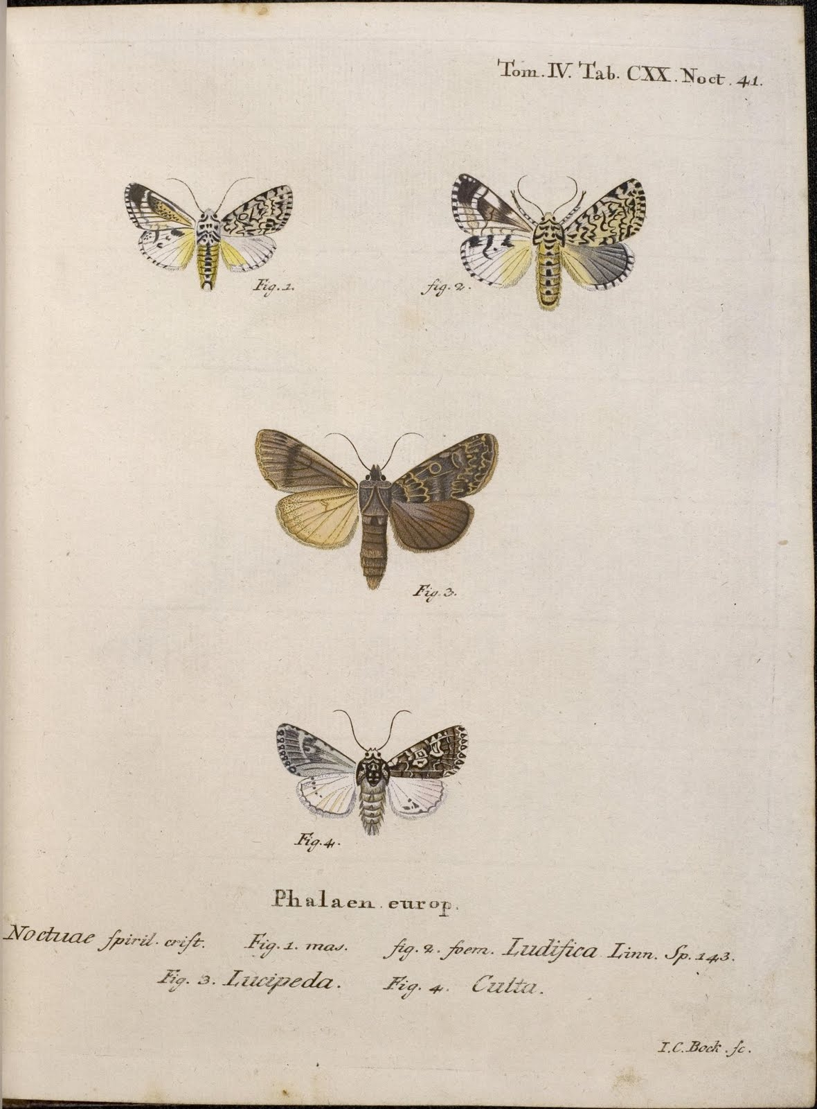 hand-coloured moth engravings