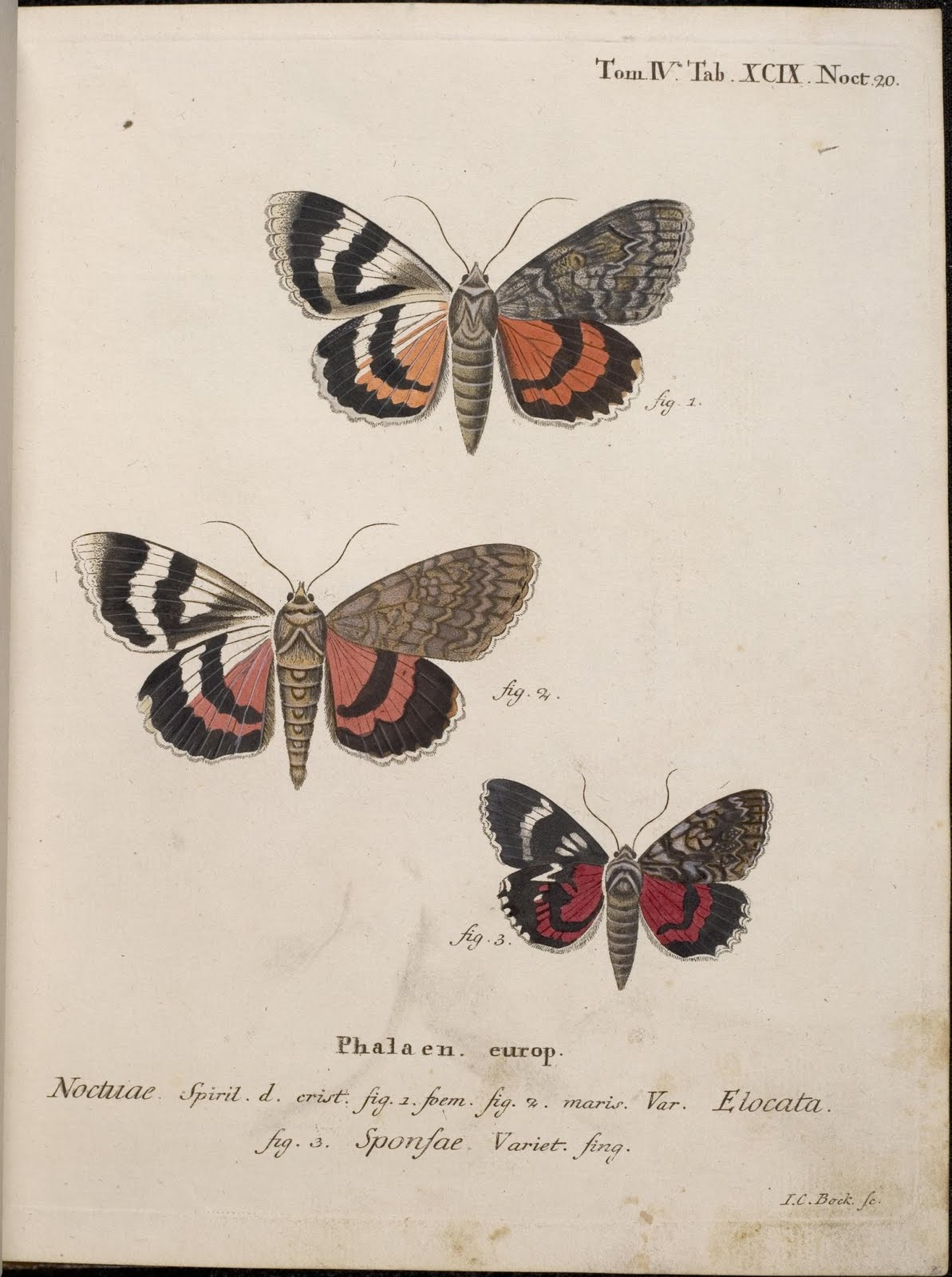 18th cent. moth engravings