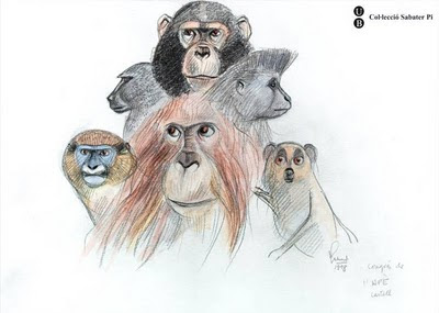 sketch of heads of monkeys and apes