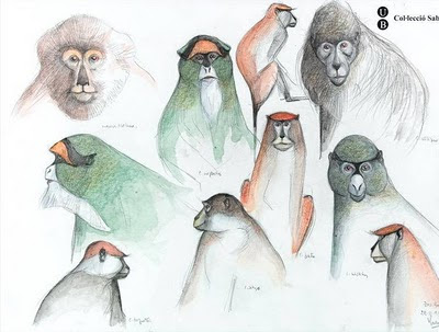 drawings of primates